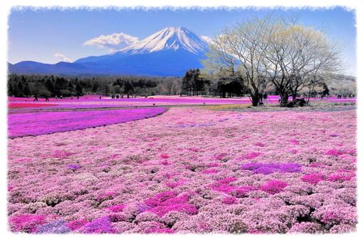 -pink-flowers-hokkaido-